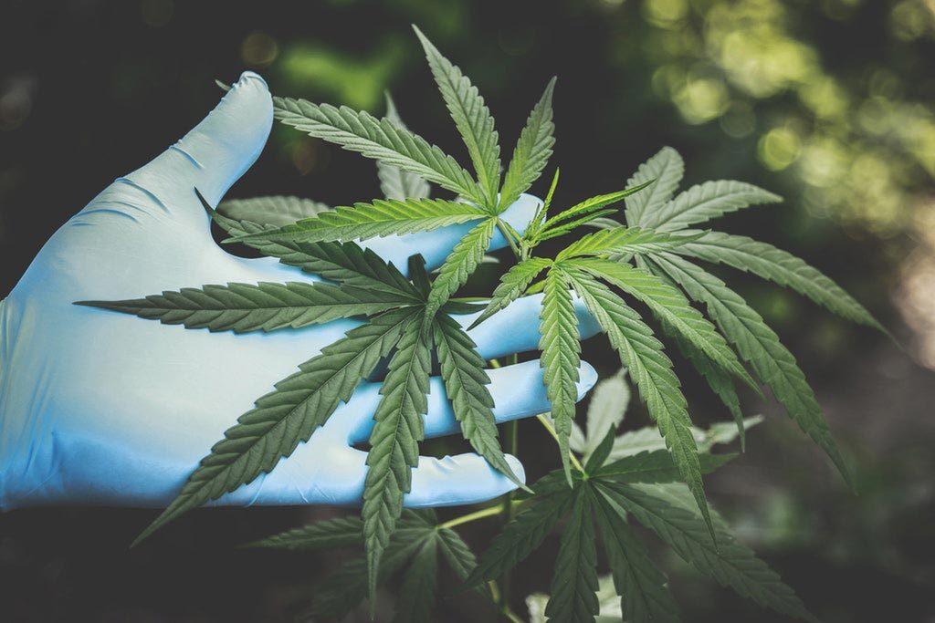 美股導航-大麻股-marijuana-stock