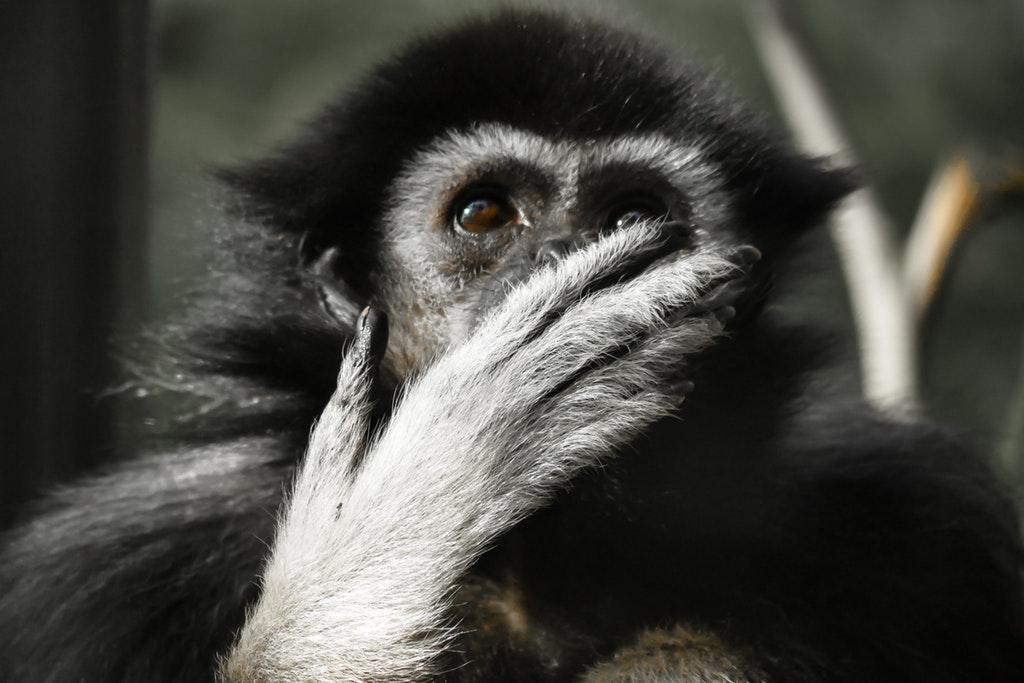 屬猴者-與太歲相合-事業-小心小人