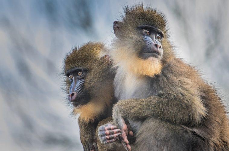 屬猴者-與太歲相合-幾大凶星